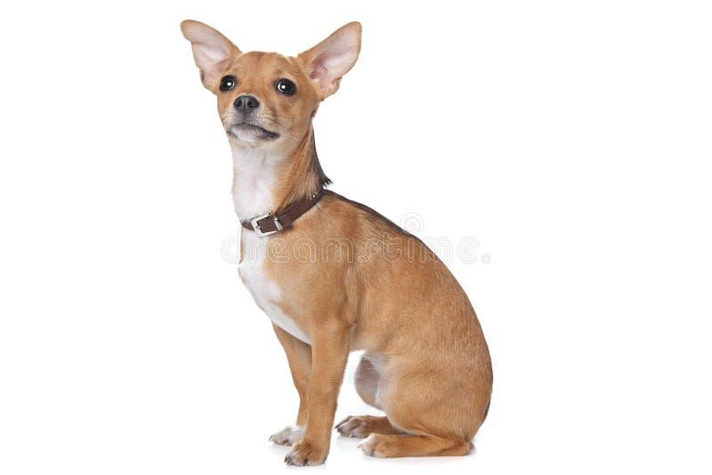 Download Mixed breed dog stock image. Image of animals, mammal - 23244657