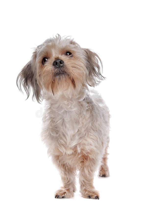 Download Mixed breed dog stock photo. Image of animal, shot, cross - 24560786