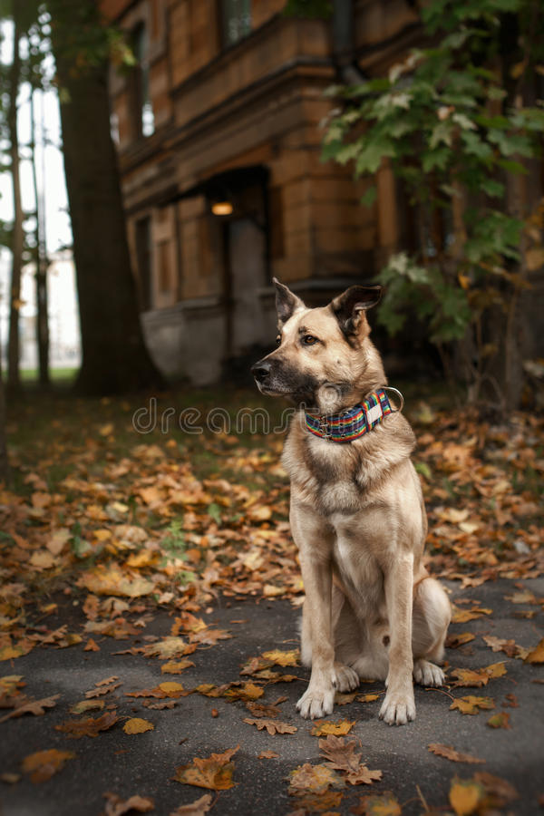 Mixed breed dog in autumn park stock image
