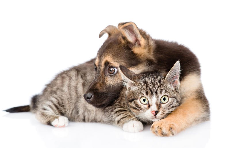 Mixed breed dog embracing tabby cat. isolated on white background stock images