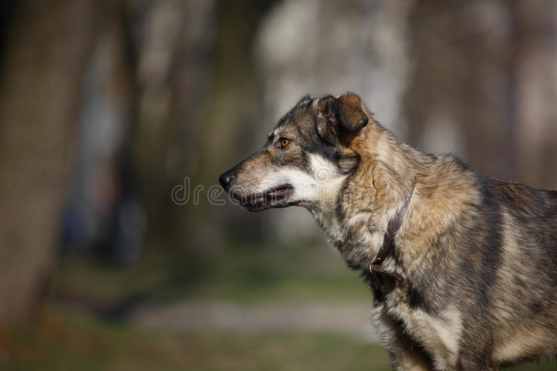 Mixed breed dog in nature stock photo