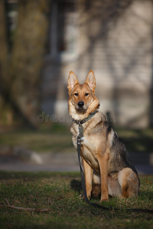 Mixed breed dog in nature royalty free stock photo