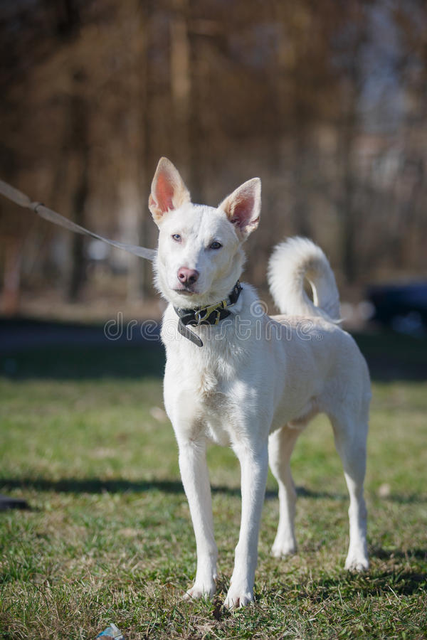 Mixed breed dog in nature royalty free stock image