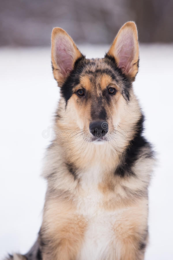 Mixed breed dog outdoors in winter. Beautiful mixed breed dog outdoors stock photo