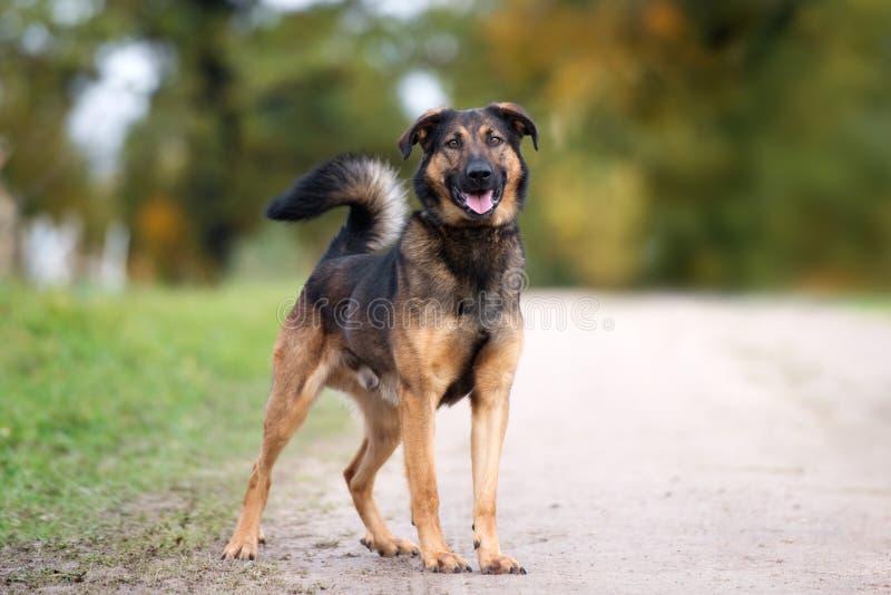 Beautiful mixed breed dog posing outdoors. Mixed breed dog posing outdoors in summer stock photos