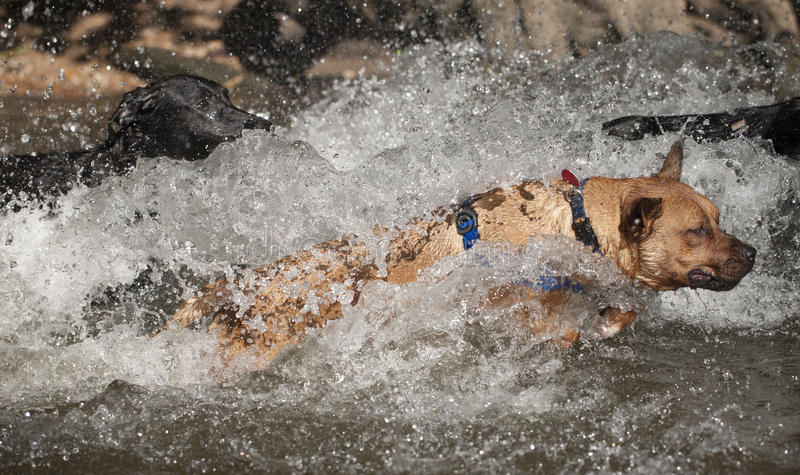 Mixed breed dog at red bud isle, austin texas royalty free stock image