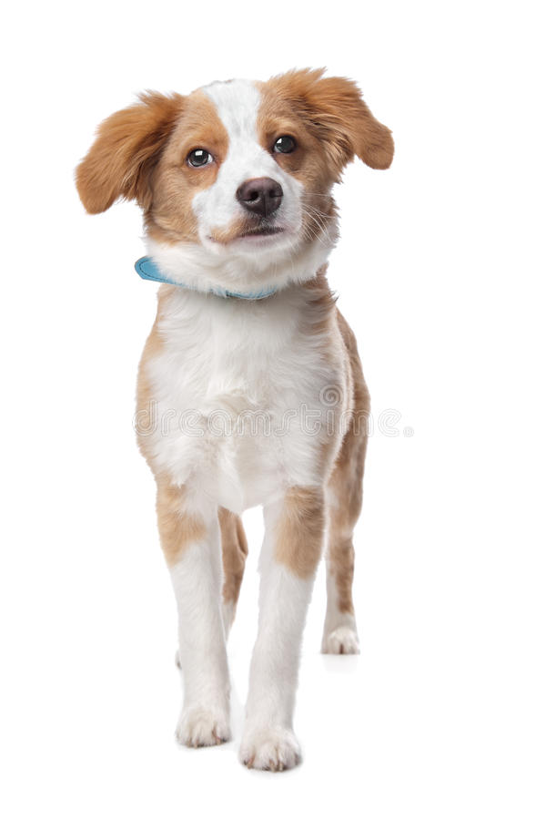Download Mixed breed puppy stock image. Image of mammal, shot - 24481023