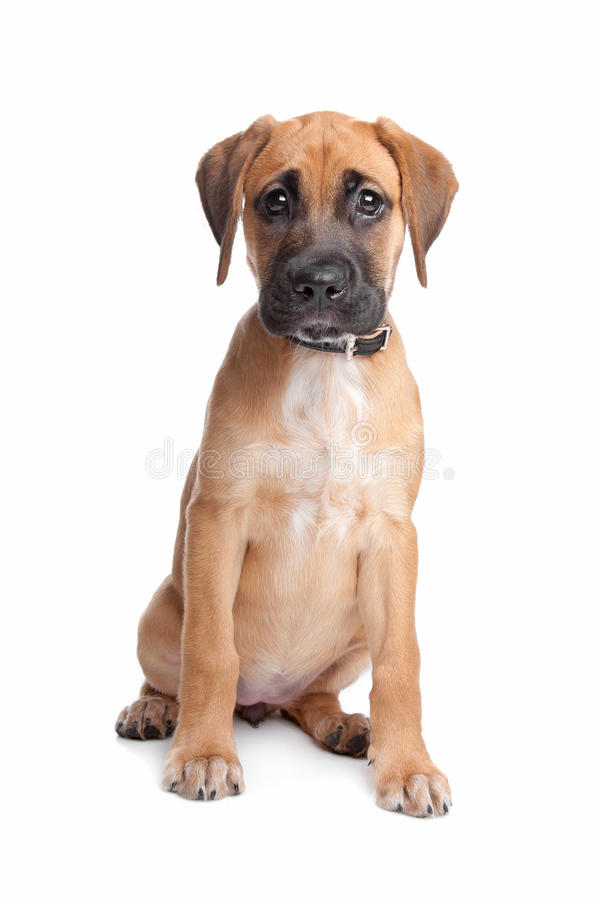 Download Mixed breed puppy stock photo. Image of domestic, over - 25097722