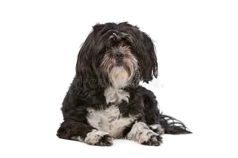 Mixed breed small fluffy dog stock photos