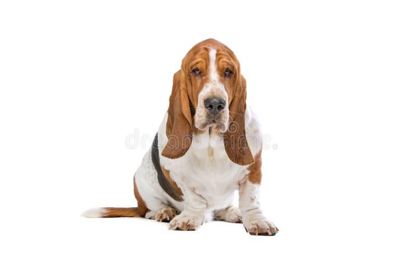 Mixed breed small fluffy dog stock image