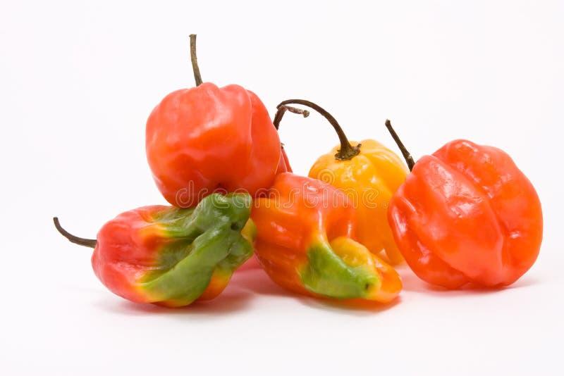 Mixed Caribbean Chillies stock photo