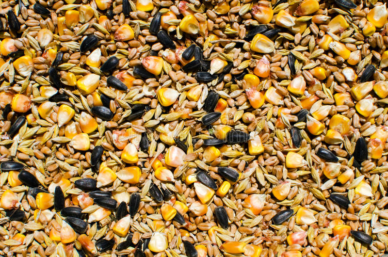 Mixed ceareals and seeds - chicken food royalty free stock photography