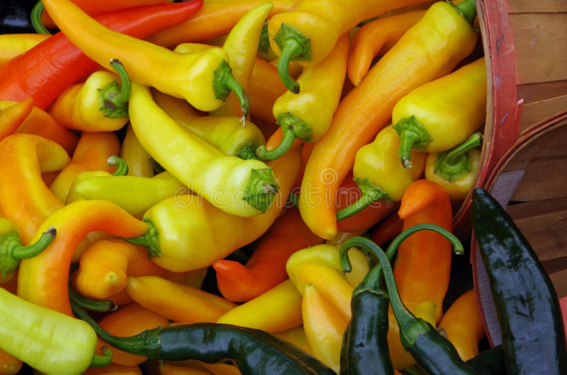 Mixed colorful peppers stock images