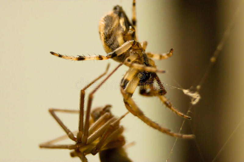 Mixed company spiders royalty free stock images