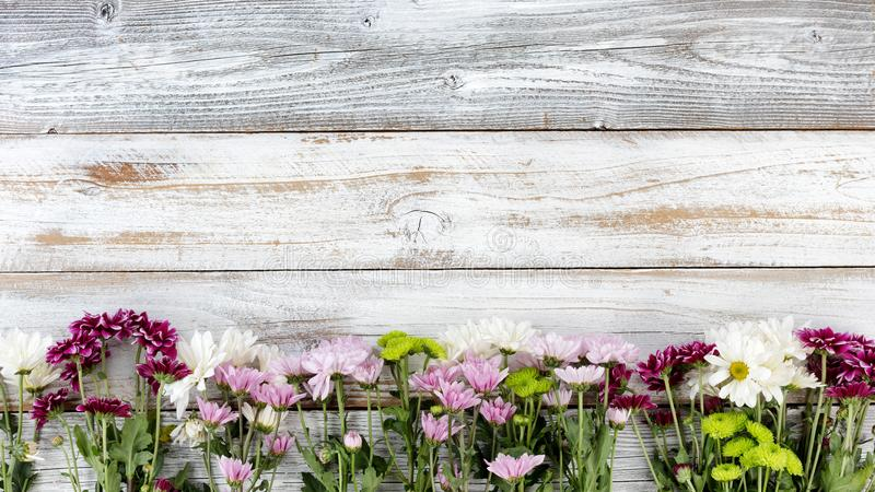 Mixed flowers forming bottom border on white weathered wooden bo royalty free stock images