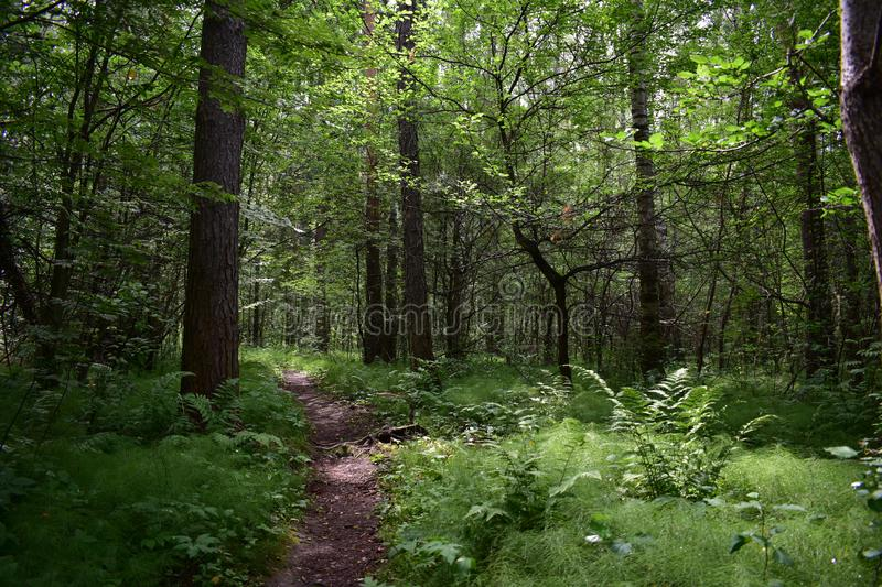Mixed forest arch of tree branches over the path, green fluffy carpet. Of grass stock photo