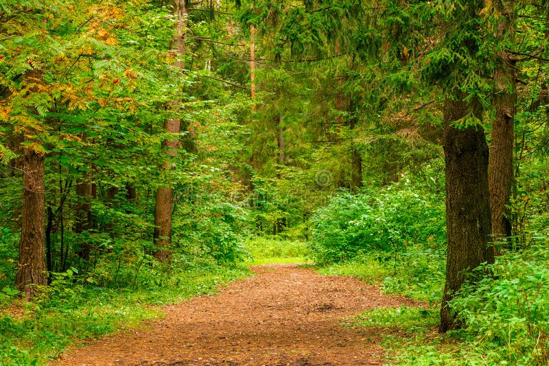 Mixed forest in autumn, landscape. In September stock image