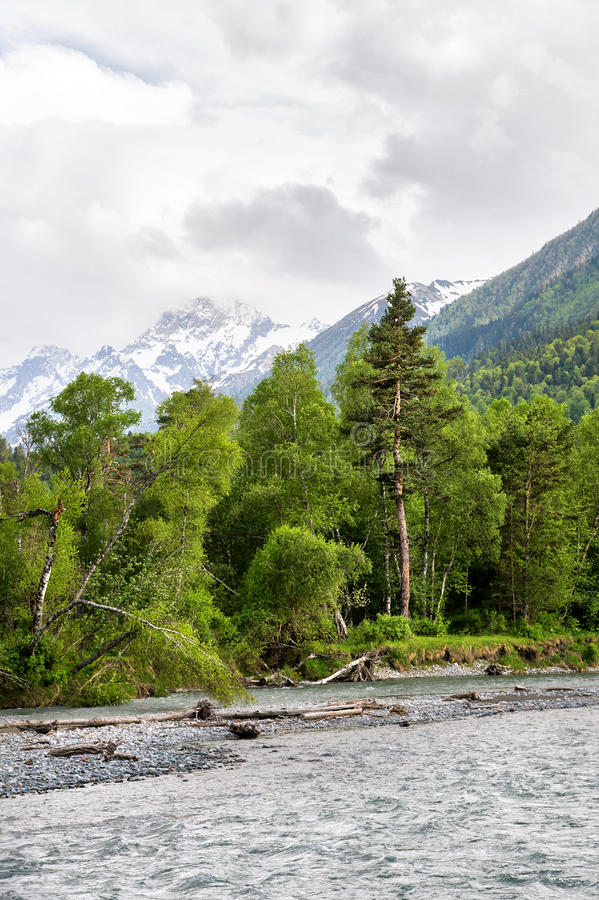 Mixed forest on the bank of a mountain river against the background of the Caucasus Mountains royalty free stock images