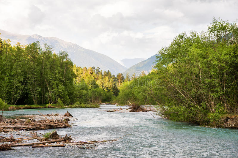 Mixed forest on the bank of a mountain river against the background of the Caucasus Mountains royalty free stock photography