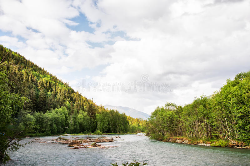 Mixed forest on the bank of a mountain river against the background of the Caucasus Mountains stock photos