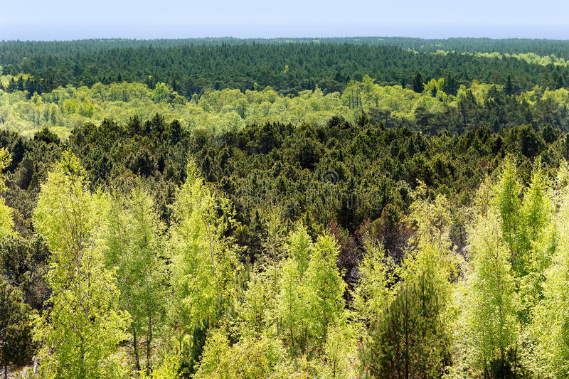Mixed forest of coniferous and deciduous breeds. view from the top.  stock photo