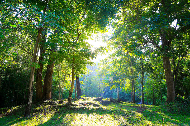 Mixed Forest. Mixed Deciduous Forest in south east asia stock photography