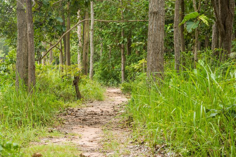 Mixed forest. In rural areas of Thailand royalty free stock photography
