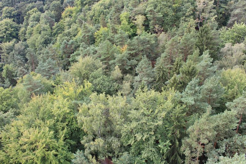 Mixed Forest. From the top. Europe, Czech Republic, north Bohemia region royalty free stock photo