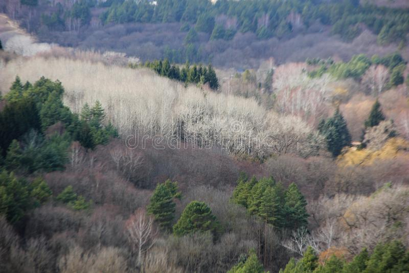 Mixed forest. Top view, green conifers, Christmas trees, branches without leaves of deciduous plants, white trunks of birches, different shades of color royalty free stock images