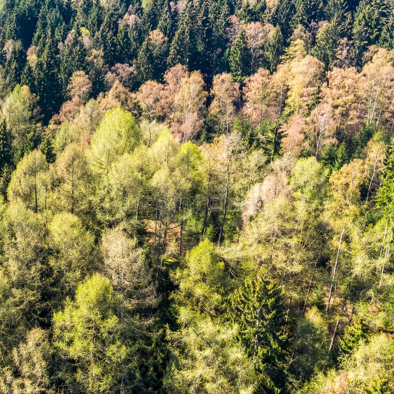 Mixed forest at a mountain slope. Nature royalty free stock image