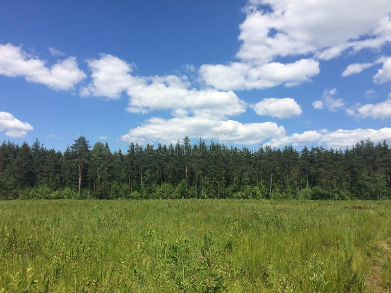 A mixed forest at summer sunny day, beautiful landscape.  stock photo