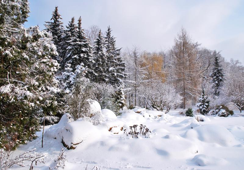 Mixed forest in winter snow stock images