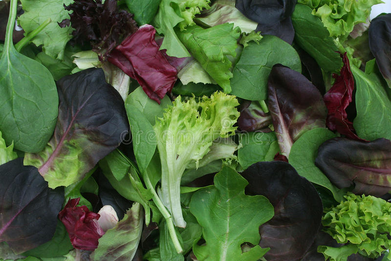 Mixed Green Lettuce Background stock photo