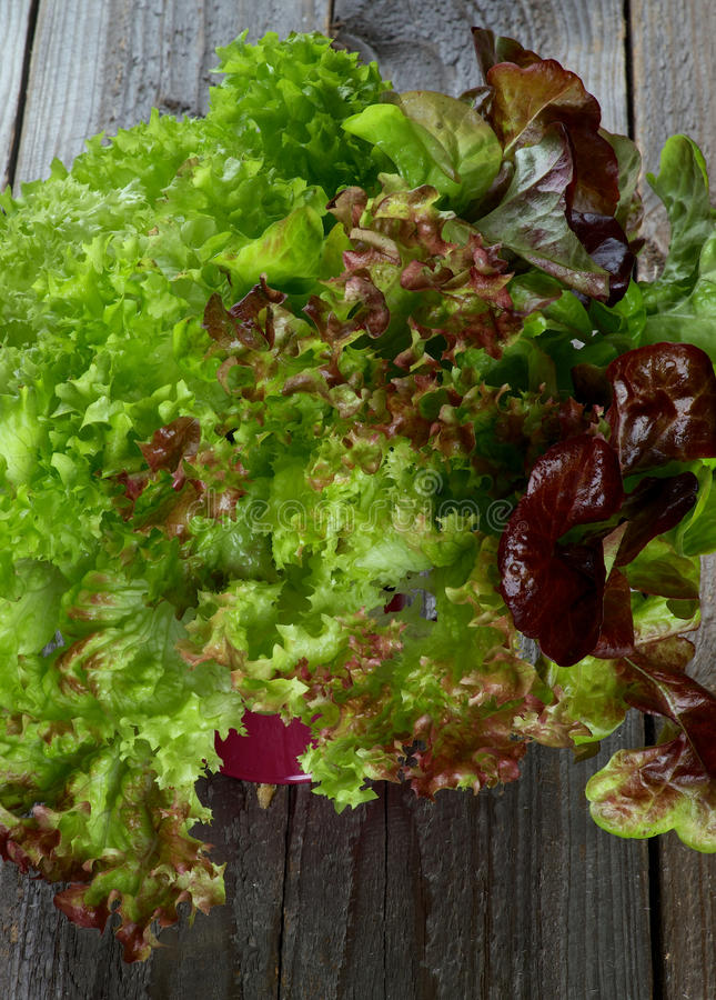 Mixed Lettuce stock photography