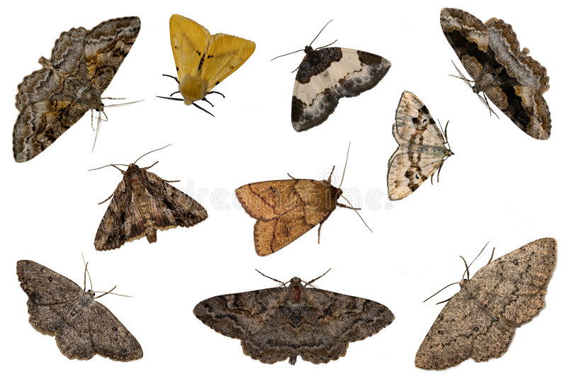 Mixed moths stock photography