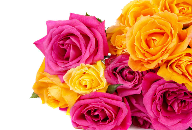 Mixed Pink And Yellow Rose Stock Images