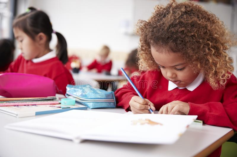Mixed race schoolgirl wearing school uniform sitting at a desk in an infant school classroom drawing, close up stock image