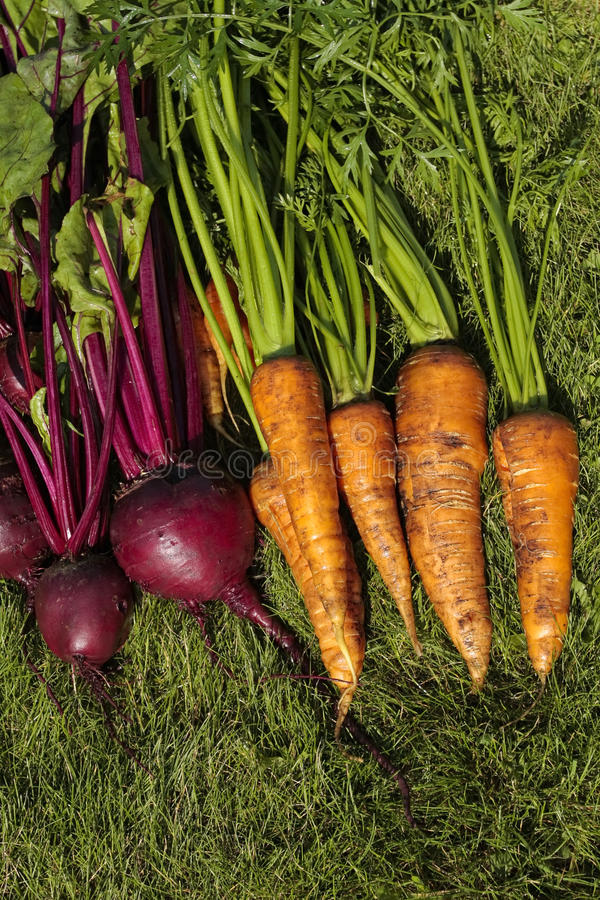 Free Mixed Root Vegetables Stock Photography - 10517062