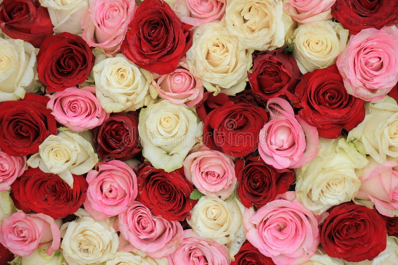 Mixed rose bouquet stock images