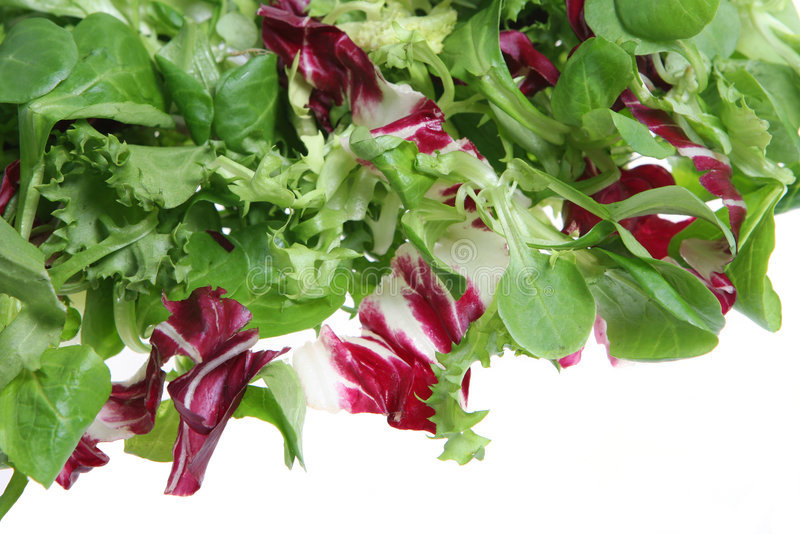 Mixed Salad. A mixed crispy lettuce salad on a white background stock photos