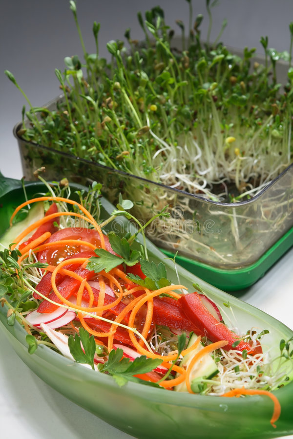 Mixed salad with sprouts royalty free stock photos