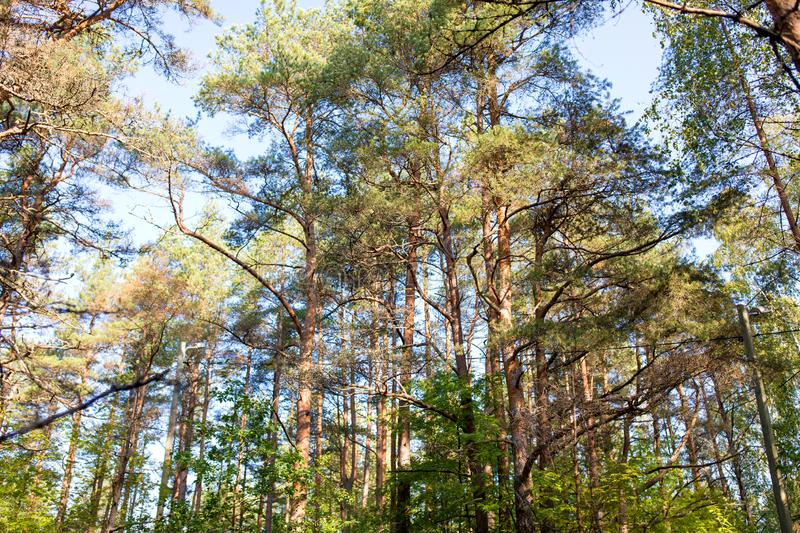 Mixed summer forest. Nature, season and environment concept - mixed summer forest royalty free stock image