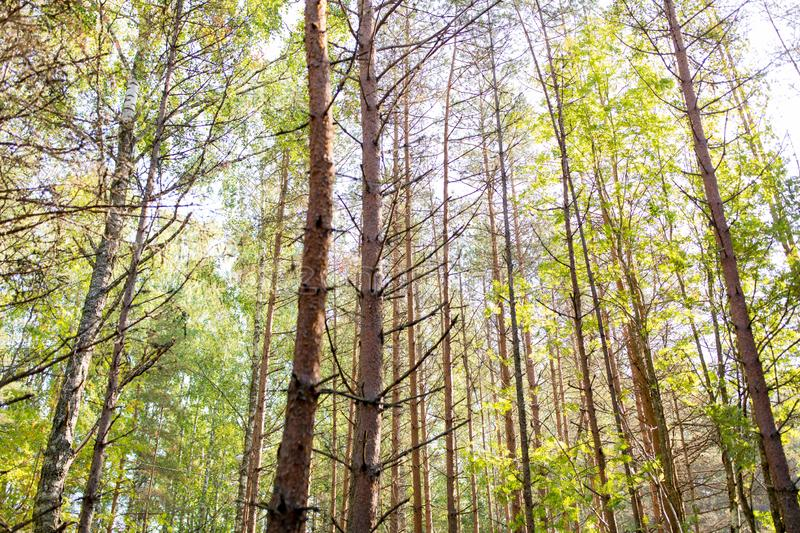 Mixed summer forest. Nature, season and environment concept - mixed summer forest stock photos
