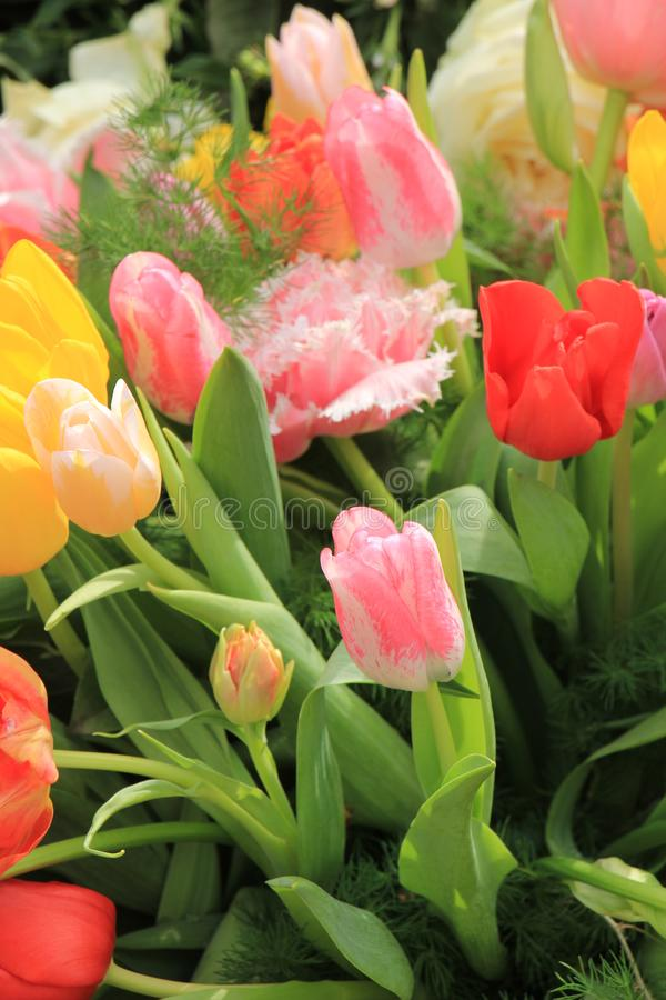 Mixed tulip bouquet stock images