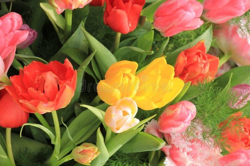 Mixed tulip bouquet stock image