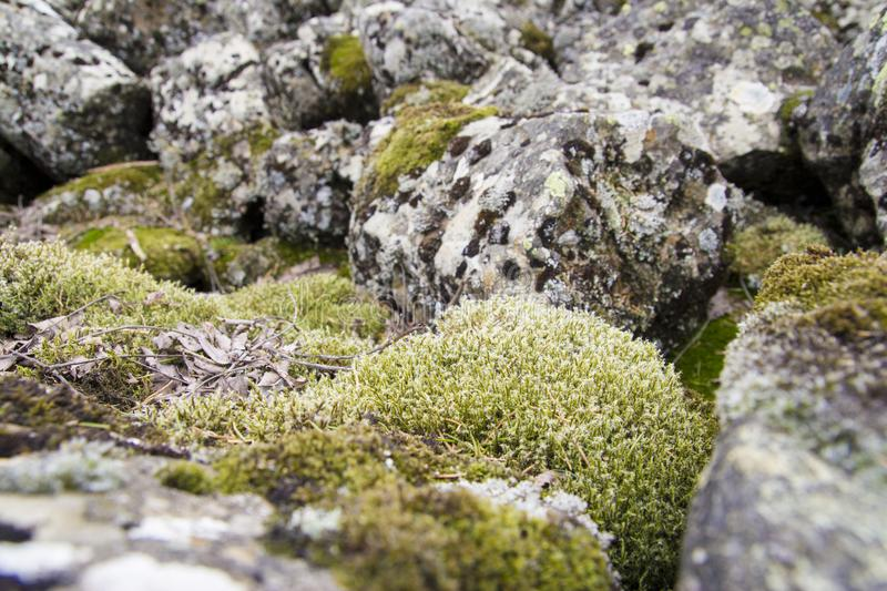 Mixed view on moss and stones. A field of stones on a mountain in germany royalty free stock images
