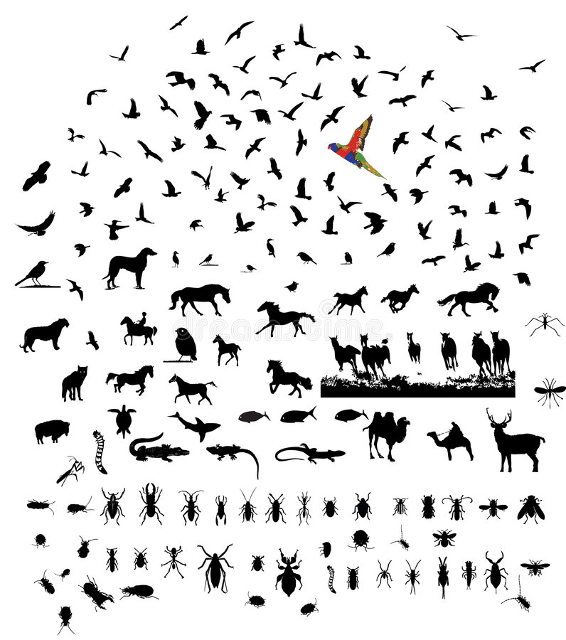 Mixed wild animal silhouettes set. Bird mammal insect reptile mixed wild animal silhouettes set royalty free illustration