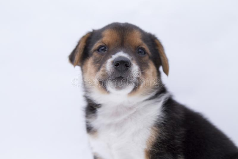 A mixedbreed puppy rescued background white stock photography