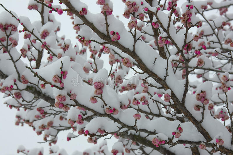 Download Mixing Of Spring And Winter Royalty Free Stock Image - Image: 11057066