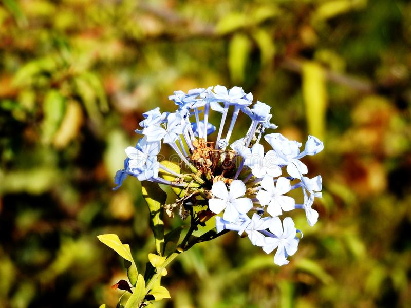 Mixt white blue flowers. South Spain, Andalucia stock photography